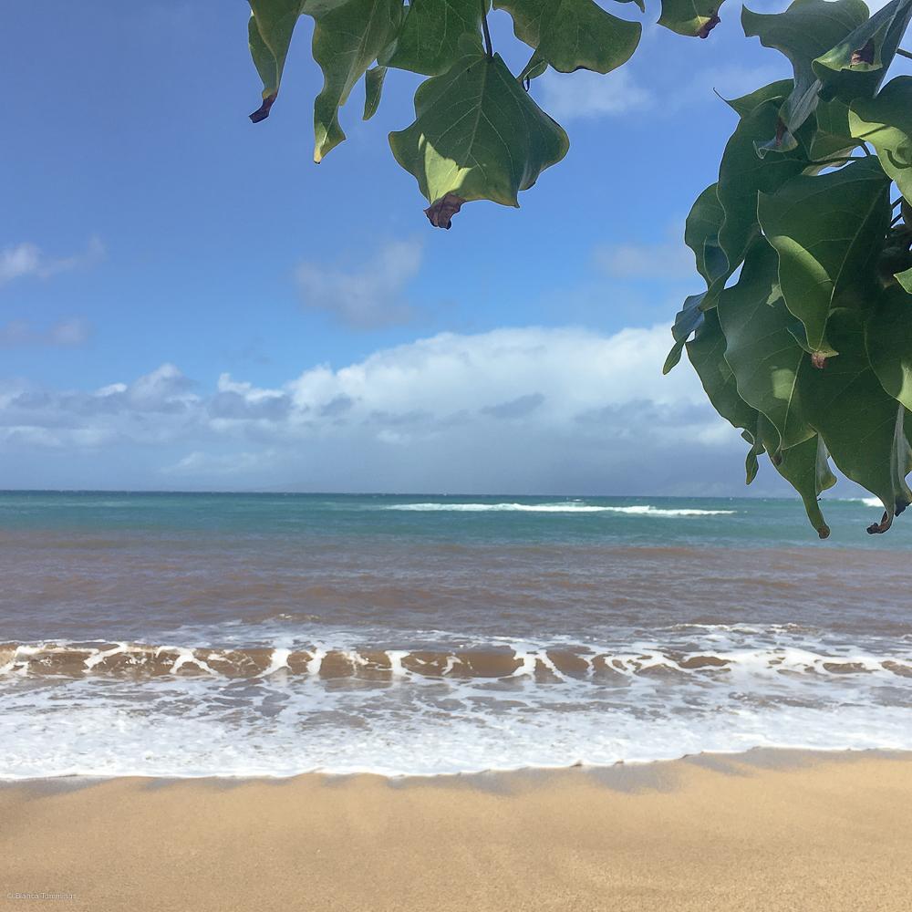 Aloha, Mahalo: Maui Snapshots – BT Photography